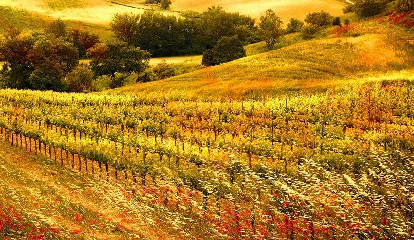 0865 Tuscan wineyard van Adrien Hendrickx