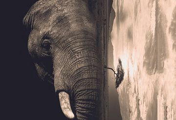 Duistere olifant (double exposure) van