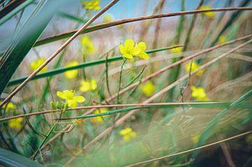 Gelbe Blume in Grün von Daphne Groeneveld