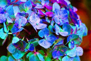 Petals / Bloemblaadjes van Joke Gorter