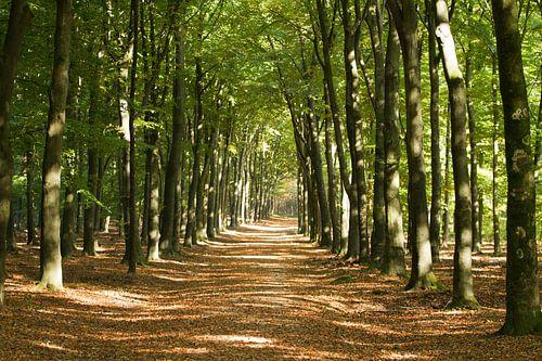 Warme herfstkleuren in het bos.