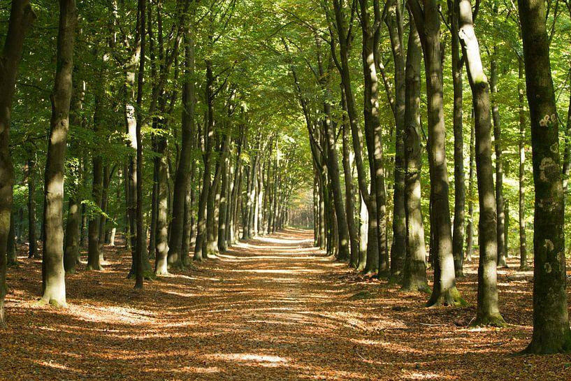 Warme herfstkleuren in het bos. van Mark Nieuwkoop