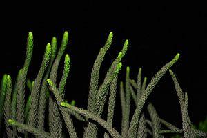 groen dansende bloemen in de nacht