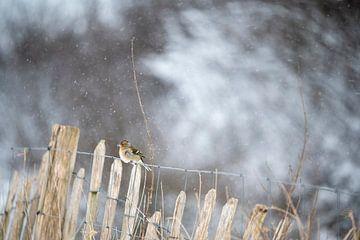 Vogel auf einem Zaun von Alvin Aarnoutse