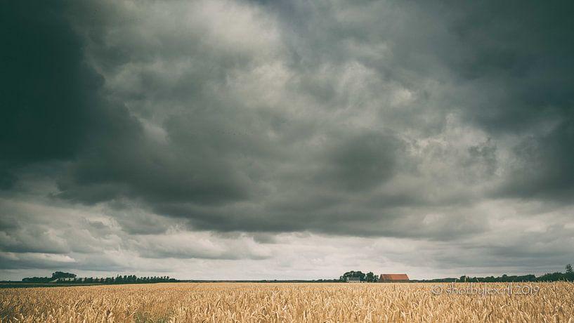 Gouden graanveld (kleur) van Lex Schulte