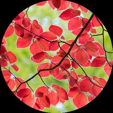 rode en groene bladeren in de lente van Henno Drop