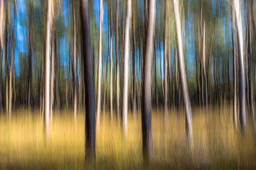 Herfst bos von Richard van den Hoek