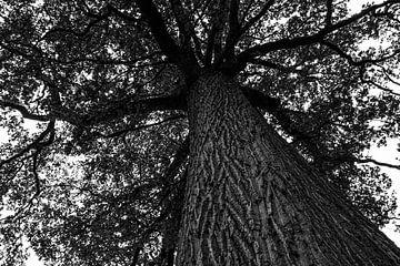 Ein Baum von einem Baum von Lucia Leemans