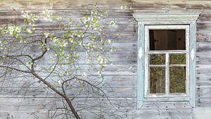 Houten huis met bloeiende fruitboom van