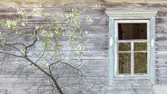 Houten huis met bloeiende fruitboom