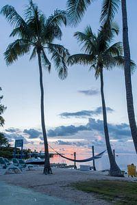 Palmboom met hangmat van