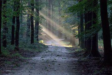 Waldweg mit Sonnenlicht von whmpictures .com