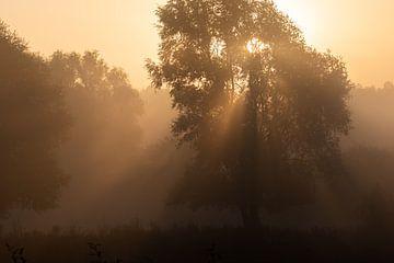 zonnestralen van Tania Perneel