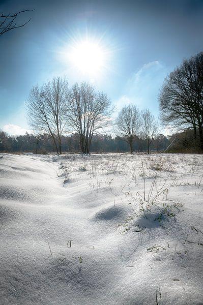 Winter wonderland van Mark Bolijn