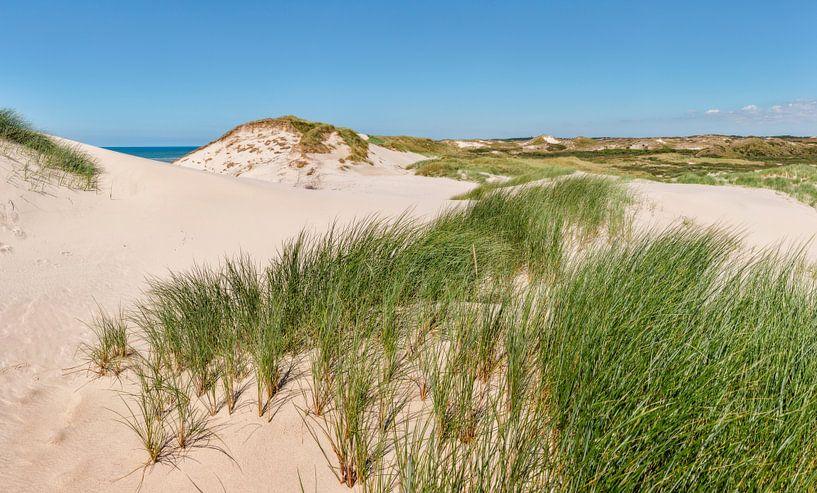 Duinen in Het Noordhollands Duinreservaat, strand en de Noordzee, Bergen aan Zee, Noord-Holland, Ned van Rene van der Meer