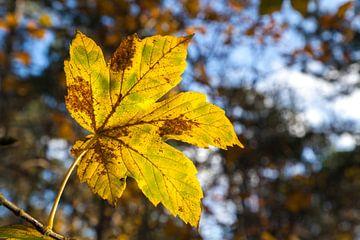Herfstblad in de zon van Nel Diepstraten