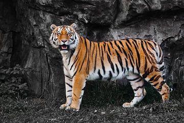 Een fel oranje gestreepte tijger steekt af tegen een verkleurde achtergrond, een prachtig beest van Michael Semenov