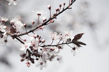 White Blossom van Marianne Rouwendal