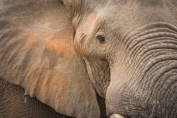 Close up van een olifant