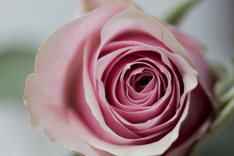 Rose traitée avec la technique de la peinture à l'huile sur Tosca Dekker - Fleury