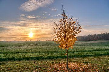 Herbstlicher Sonnenuntergang von Uwe Ulrich Grün