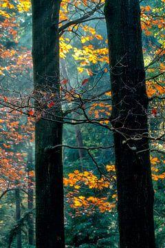 Herfst van Lars van de Goor