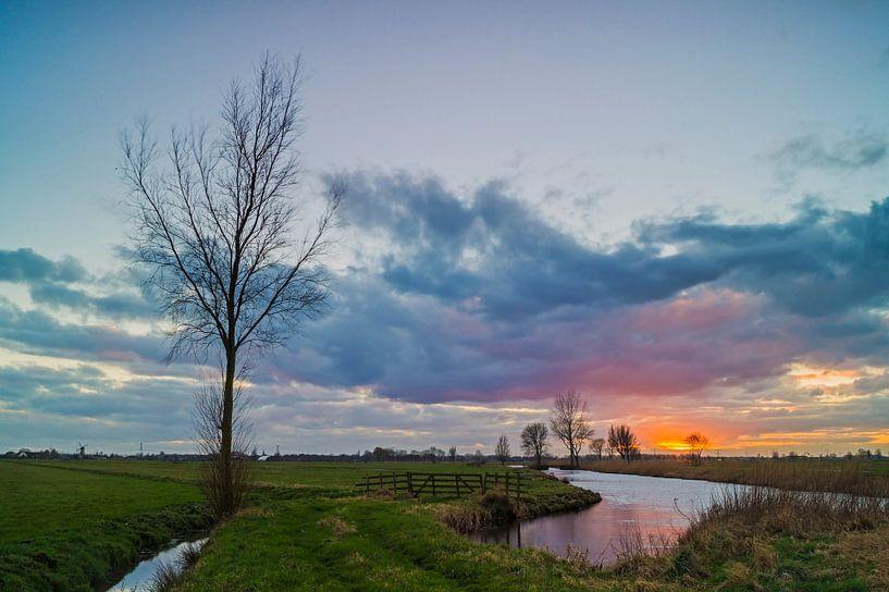 Lonely tree van Jan Koppelaar