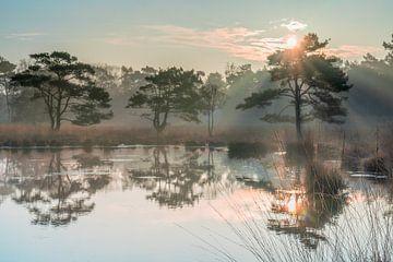 Lever de soleil à Hoogerheide. sur Ivo Schut Fotografie