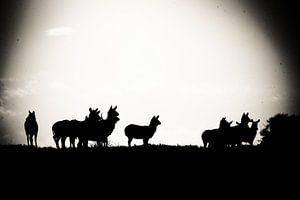 Silhouet Animals