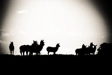 Silhouet Animals van Erik van Leyden