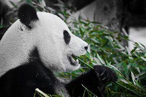 Vrolijke panda met eetlust eet greens, een symbool van een plantaardig dieet, in profiel van Michael Semenov