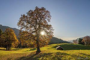 Herbstbaum