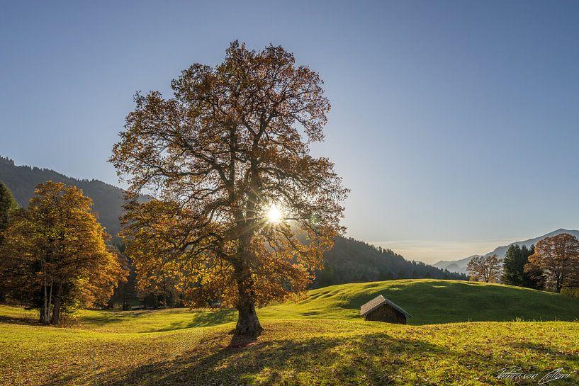 Herbstbaum von Patrice von Collani