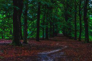 Weg naar het bos van Robbert Ladan