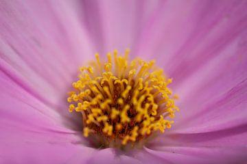 Blume 4 von Esther Erkelens
