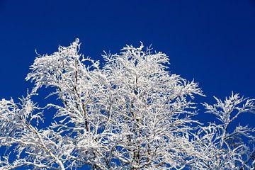 Ein wahrer Wintertraum! Angezuckerte Baumäste, tiefblauer Himmel - so stellt man sich den Winter vor