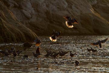 Tauben im Sonnenaufgang von Angelika Stern