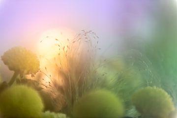 Pastel flowers: warm glow van Cathy Roels
