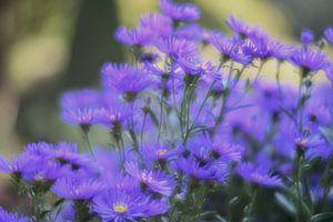 bloemen part 9 van Tania Perneel