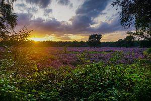 Kleurrijke zonsondergang bij heide van
