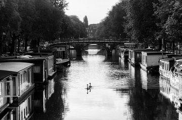 Zwanen in de grachten van Amsterdam von Dennis van de Water