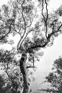 Regenwoud in de mist van