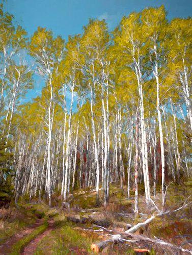 Berkenbos in Noord Canada