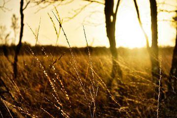 grassprieten in de avondzon van Verrassend Brabant