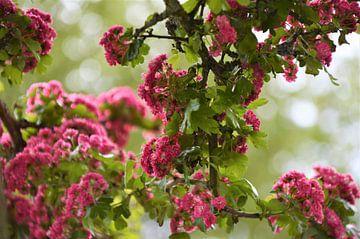 Roze Bloemenzee van DoDiLa Foto's