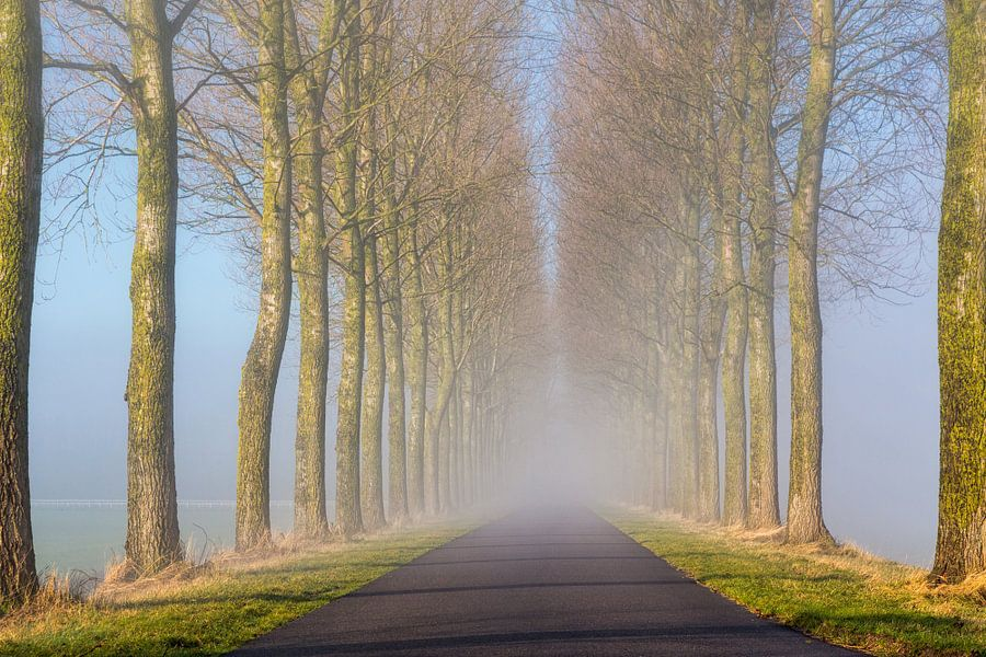 Landweg, met bomen in de mist