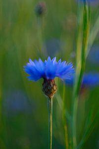 Single Blue von Louis Kreuk
