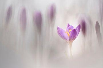 Frühling wieder von Bob Daalder