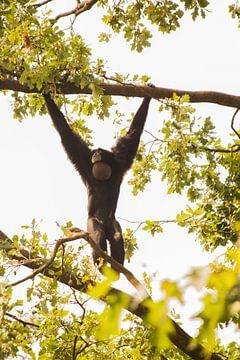 Brüllaffe im Baum hängend von Tosca Dekker - Fleury
