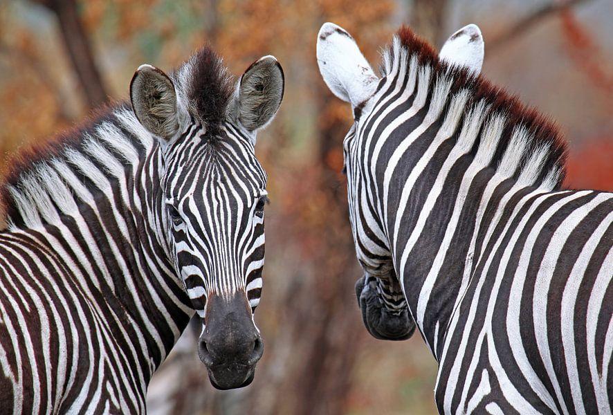 Vor und zurück - Afrika wildlife